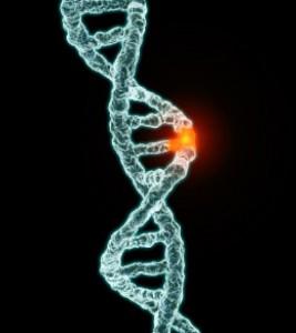 mutation adn
