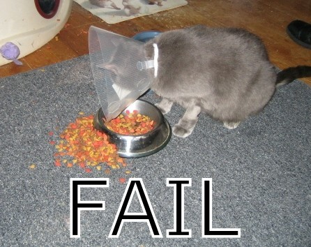 chat-colerette-fail