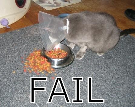 chat-colerette-fail