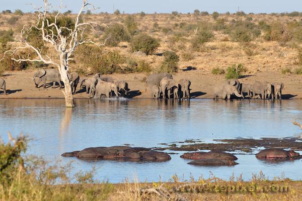 Plan d'eau de Ngotso