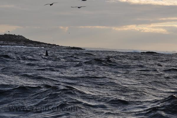 Un aileron à Seal Island